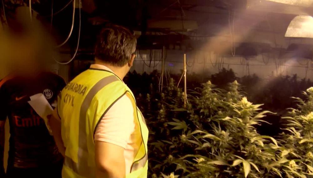 La Guardia Civil da con una plantación de marihuana