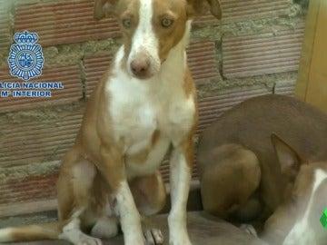 Con las orejas cortadas, rociados con ácido... los casos de maltrato animal que se saldaron con multas ridículas