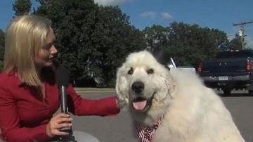 Duke, el perro alcalde de Cormorant