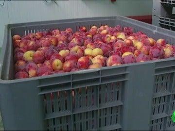 Las exportaciones de fruta española llegan a China en un negocio que puede superar los 1.000 millones