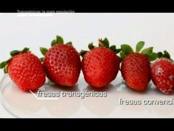 ¿En qué se diferencia una fresa transgénica de una fresa convencional?