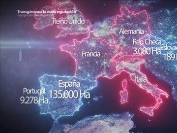 España, el granero transgénico de Europa donde el maíz aragonés es el rey
