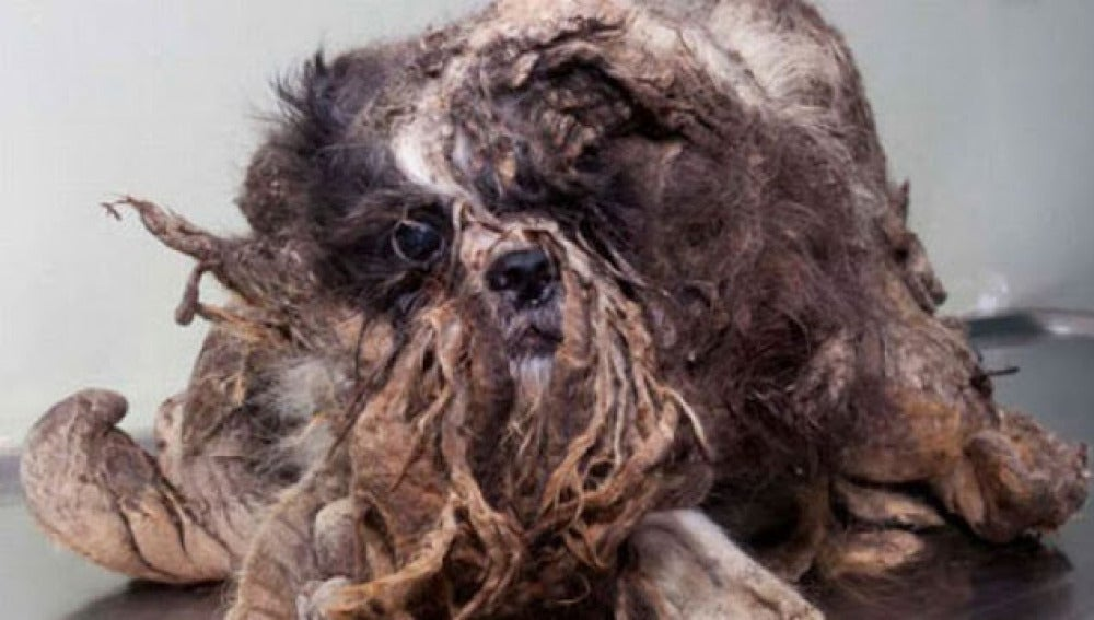 Imagen del perro cuando fue encontrado