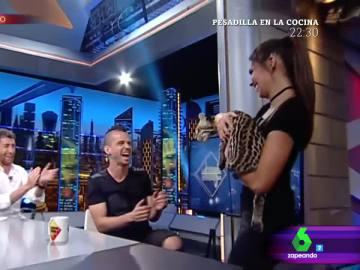 La sorpresa más felina de Cristina Pedroche a David Muñoz