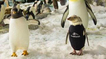 Wonder Twinm luce su esmoquin de neopreno junto a sus compañeros pingüinos