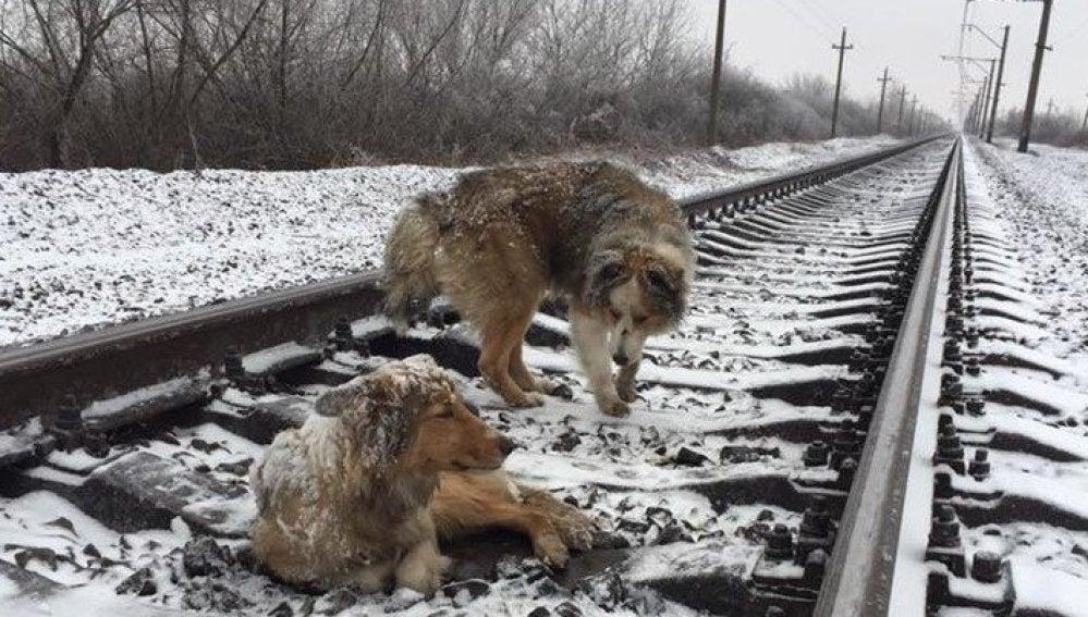 La pareja de perros 'atrapada' en las vías del tren