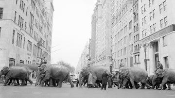Un desfile de elefantes organizado por el circo Ringling