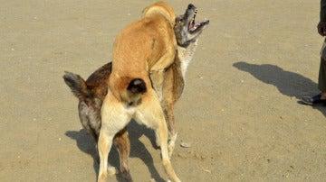 Imagen de archivo de dos perros peleándose