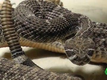 Frame 0.0 de: serpiente