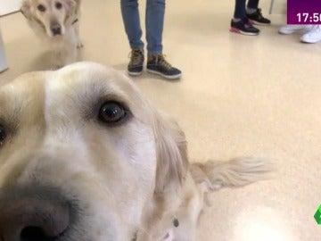 Frame 0.739641 de: perros terapeuticos