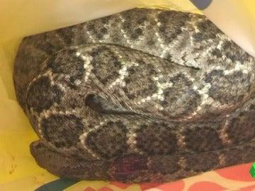 Frame 0.493624 de: La Policía cree que el joven mordido por una serpiente de cascabel era el dueño del animal