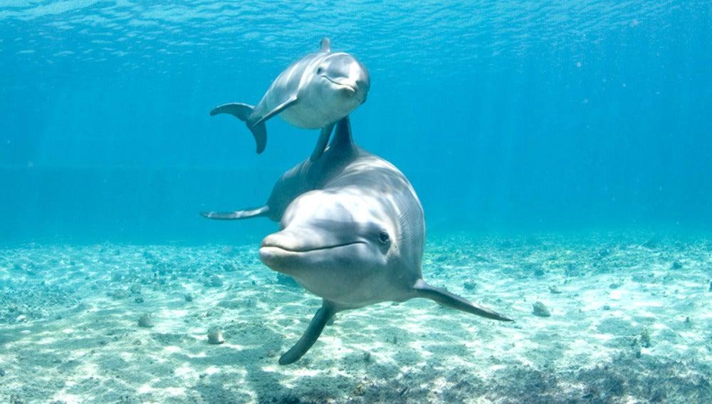 Resultado de imagen de delfines atrapados