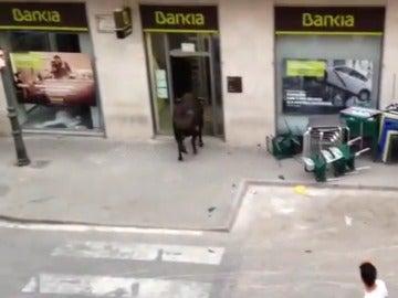 Un toro se cuela en las oficinas de Bankia en Valencia durante los festejos taurinos