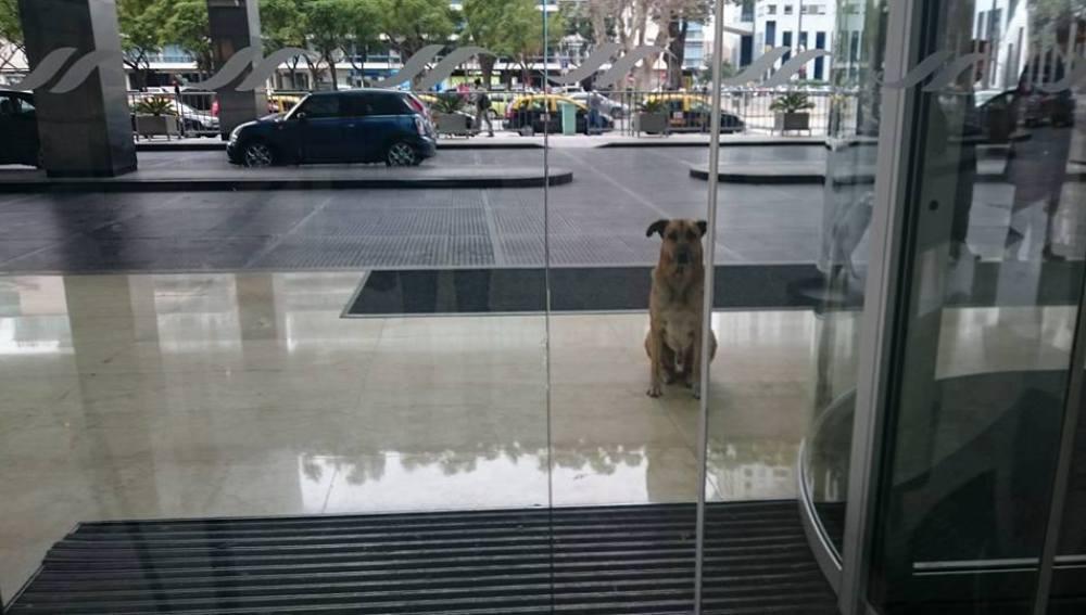 Rubio esperando a Olivia en la puerta de su hotel