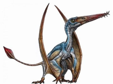 Ilustración del pterosaurio