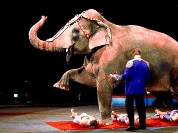 Momento de un espectáculo circense con un elefante