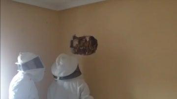 25.000 abejas tras el pladur de su casa