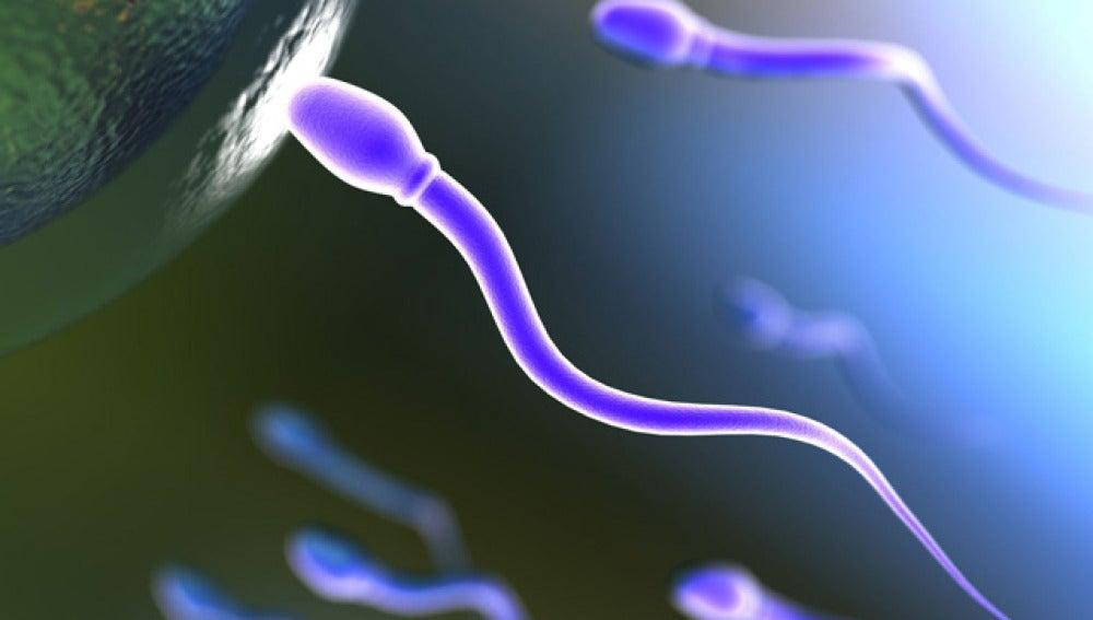Factores que afectan a la calidad del semen | TECNOXPLORA