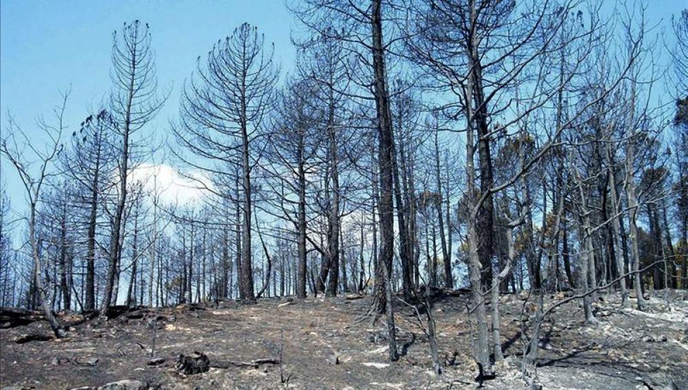 Zona afectada por el incendio declarado en 2005 en Guadalajara