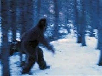 Una de las imágenes que circulan en la red sobre posibles 'Yeti'