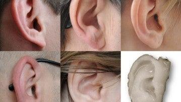 Crean orejas humanas