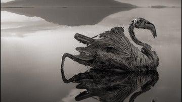 Aves petrificadas en el lago Natrón
