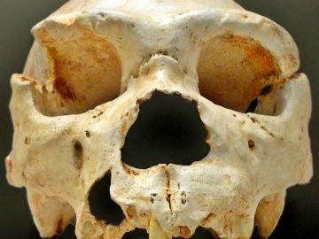 Miguelón. El cráneo número 5 de la Sima de los Huesos de Atapuerca