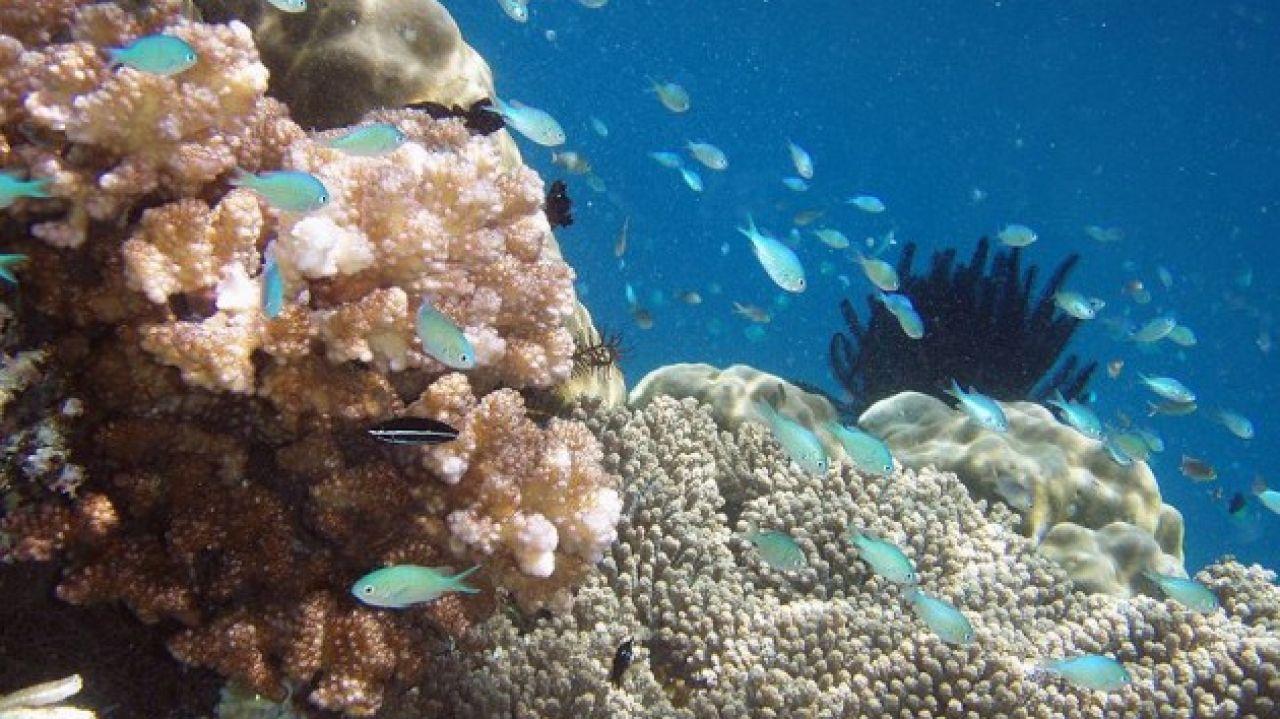 Islas de Raja Ampat, en Indonesia