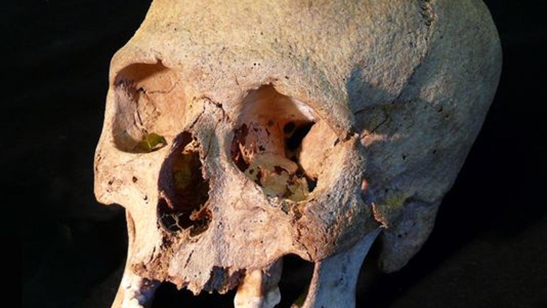 Cráneo de un joven vikingo enterrado junto a su esclava