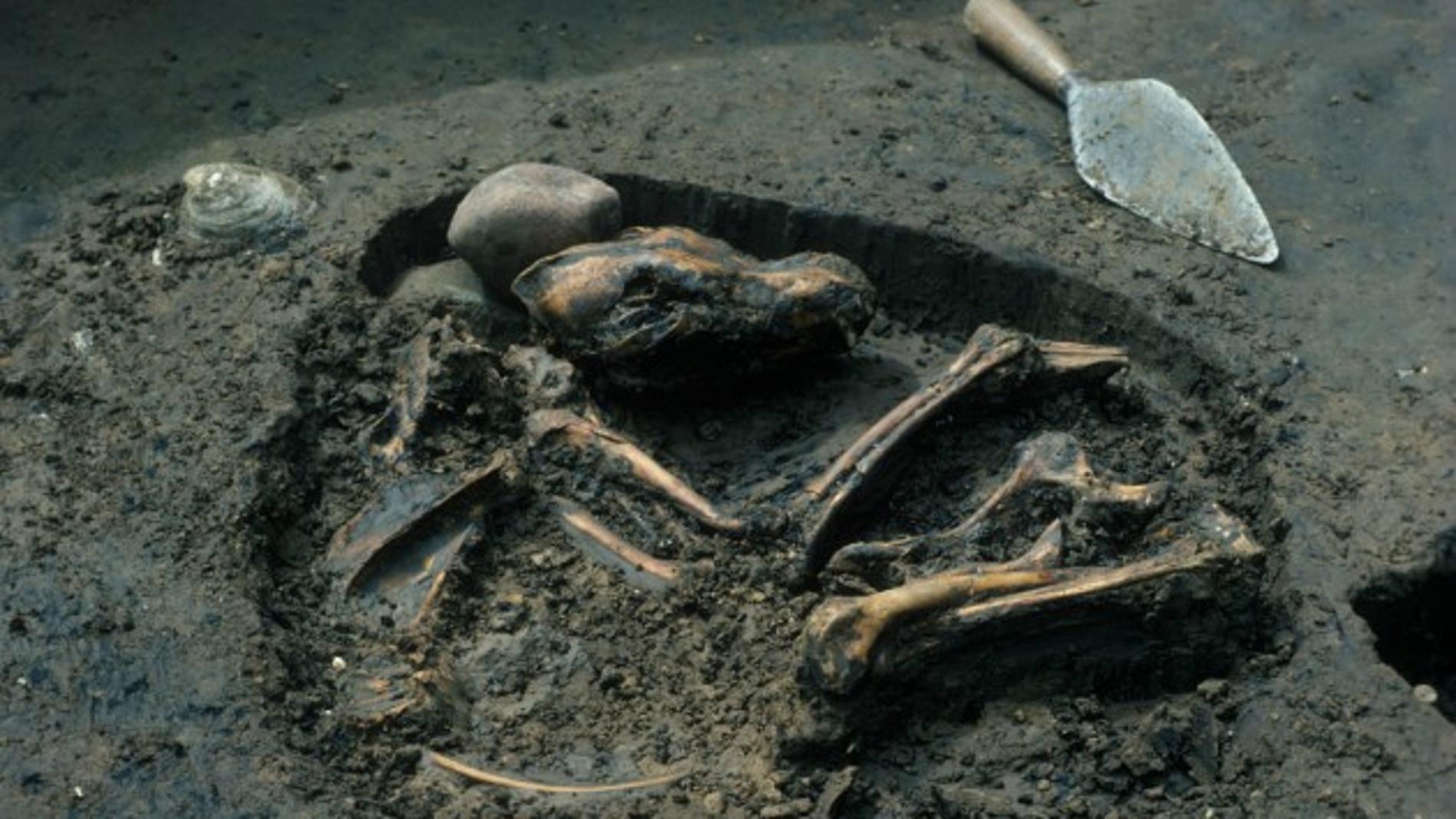 Enterramiento canino de hace 8.500 años hallado en Illinois (EEUU)