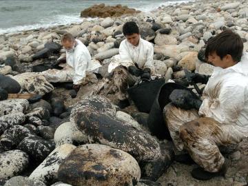 Voluntarios recogen fuel de debajo de las piedras en la costa de Carnota.