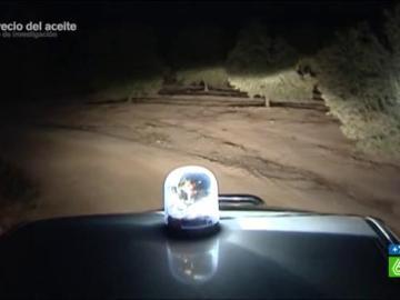 Los ladrones asaltan el olivar en noches de luna llena