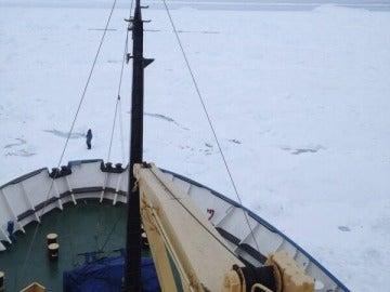 Imagen del Akademik Shokalskiy atrapado en el hielo
