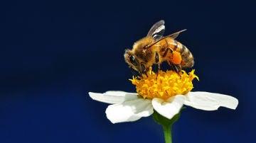 A Europa le falta un tercio de abejas necesarios para biocarburantes