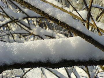 Nieve sobre la rama de un árbol