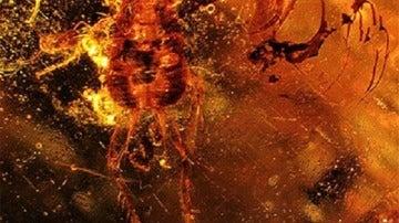 Imagen de la cucaracha en ámbar hallada en el Líbano