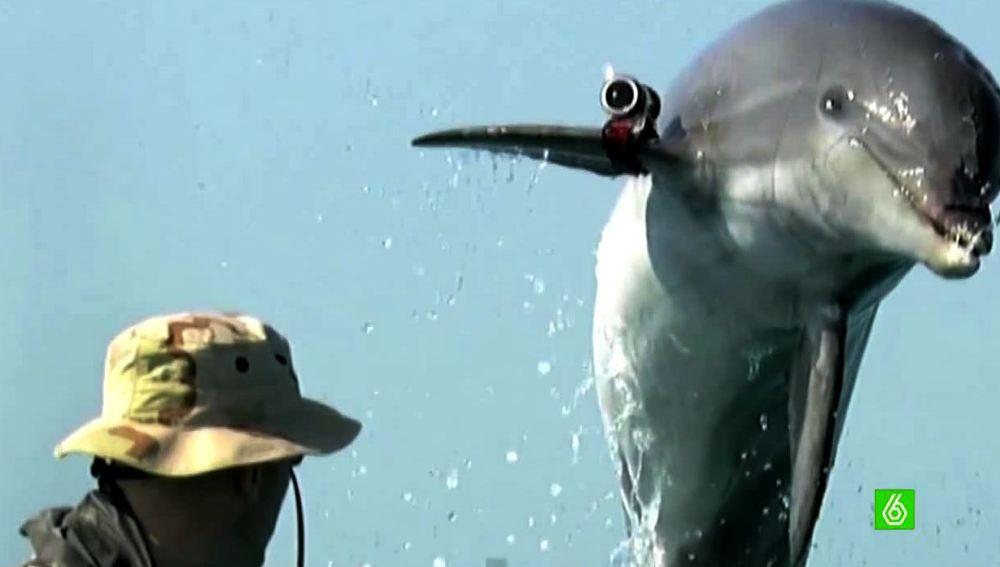 Delfín espía