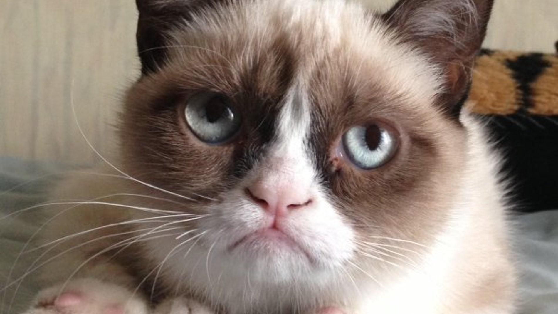 Grumpy cat,un fenómeno en internet