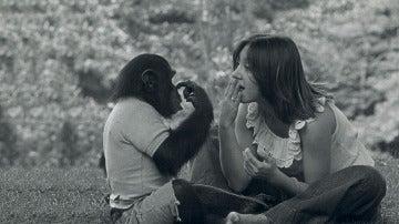 Nim Chimpsky, el chimpancé al que criaron como un humano