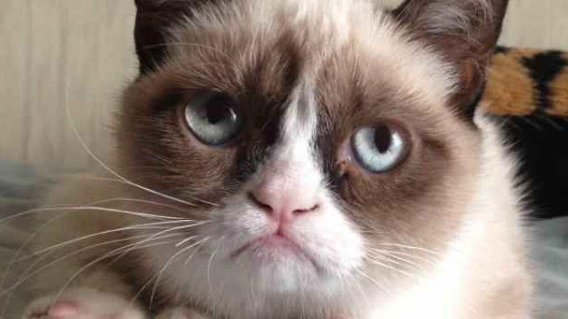 Esta imagen de Grumpy Cat no es un GIF: está enfadado con el HTML5