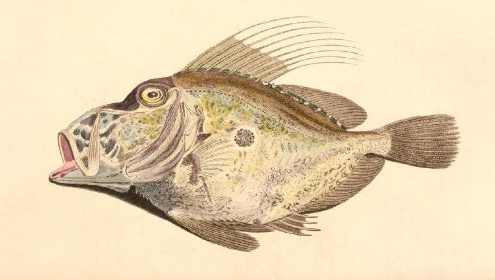 La Historia Natural del barón de Cuvier