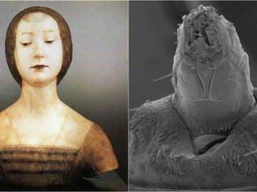 Isabel de Aragón y la larva encontrada