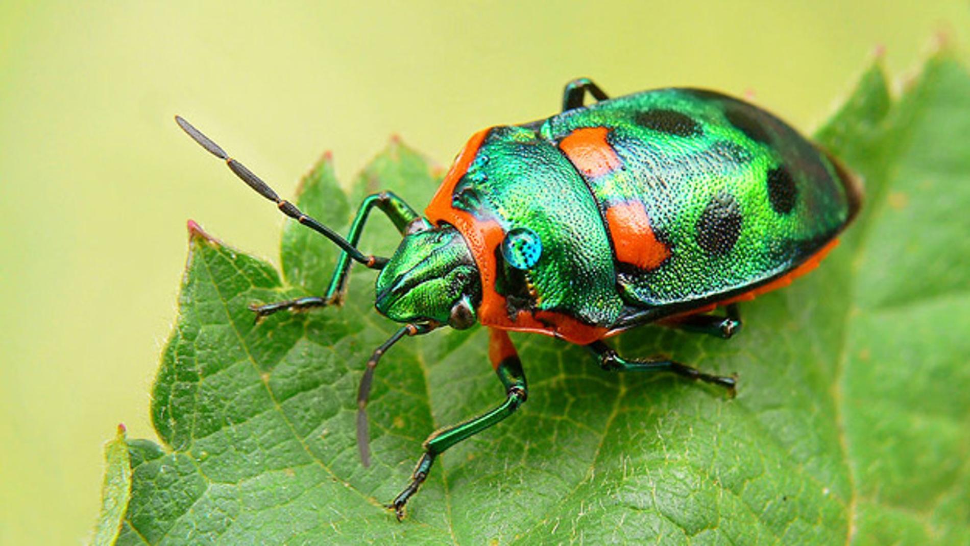 Una hoja y un insecto, ambos reflejando color verde