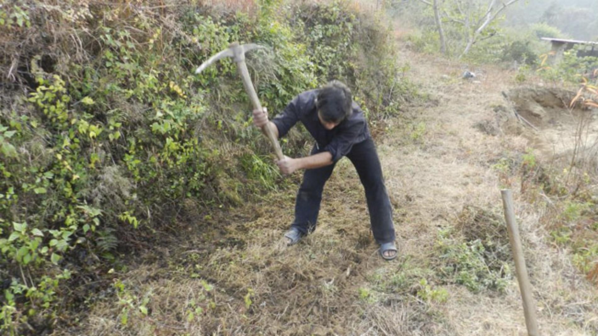 Sharma trabajando en uno de sus bosques