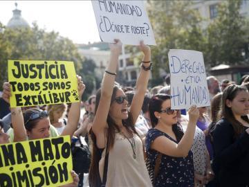 Protestas en 24 ciudades por el sacrificio del perro de Teresa Romero