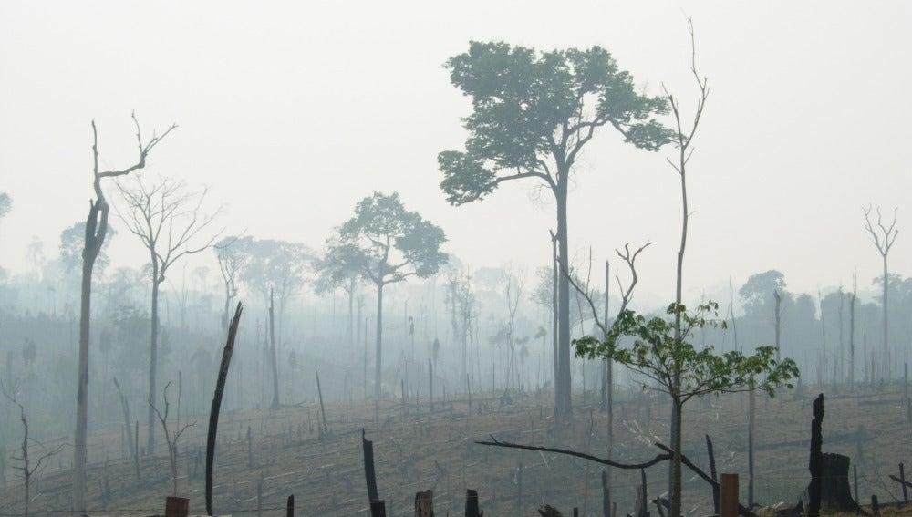 El Bosque Atlántico sólo conserva el 10%