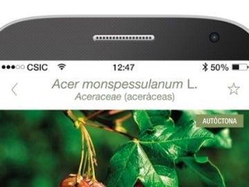 Arbolapp, la app para identificar y conocer todo sobre los árboles