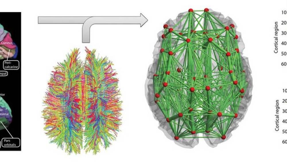 Mecanismos de la memoria