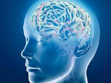 El cerebro, ante las enfermedades mentales