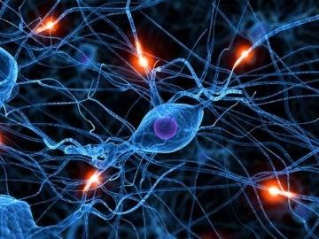Recreación de una conexión neuronal en el crebro